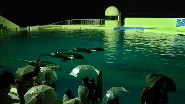 夜の水族館で泳ぐシャチ