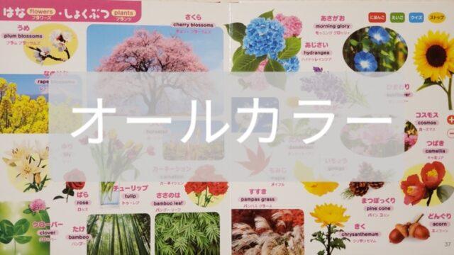 子供用ずかんの花のページ